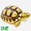 Sulcata tortoise sale