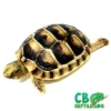 tiny tortoise for sale