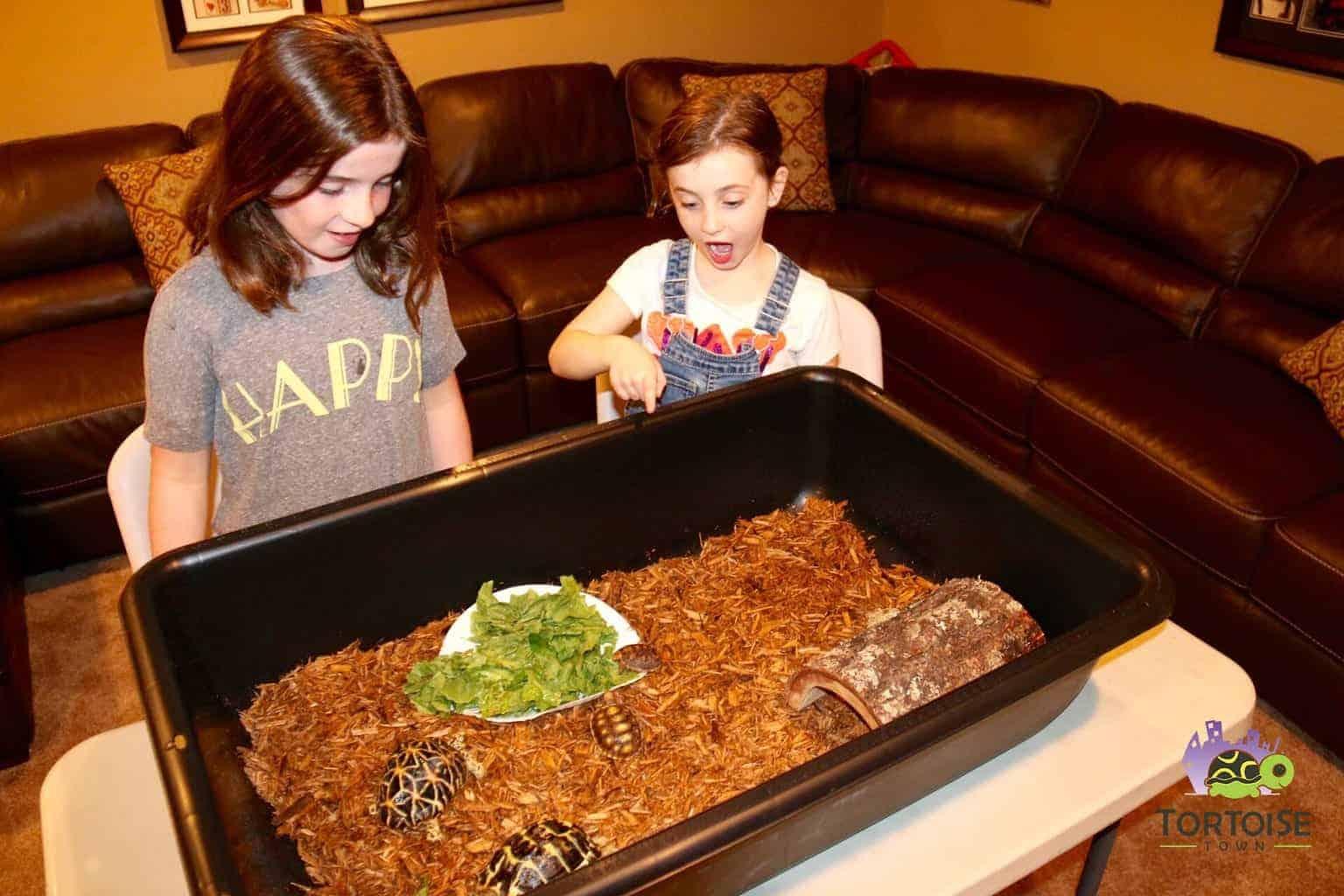 Tortoise Tub Box Turtle Tub For Sale Tortoise House