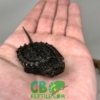 Snapping Turtle for sale