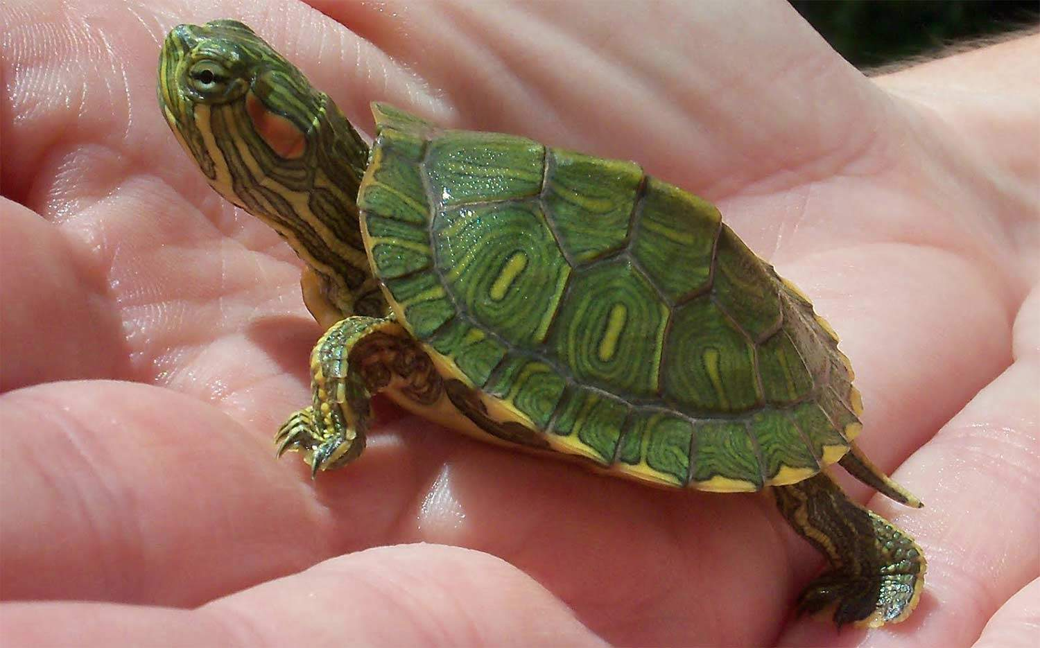 pics How to Buy a Turtle