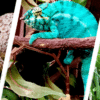 reptiles for sale online