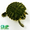 yellow belly slider turtles for sale