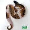 baby piebald python