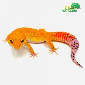 leopard gecko care tips