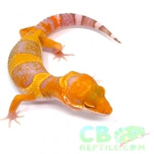 leopard gecko diet