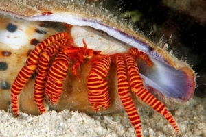 hermit crabs for sale