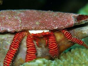 hermit crabsn for sale online